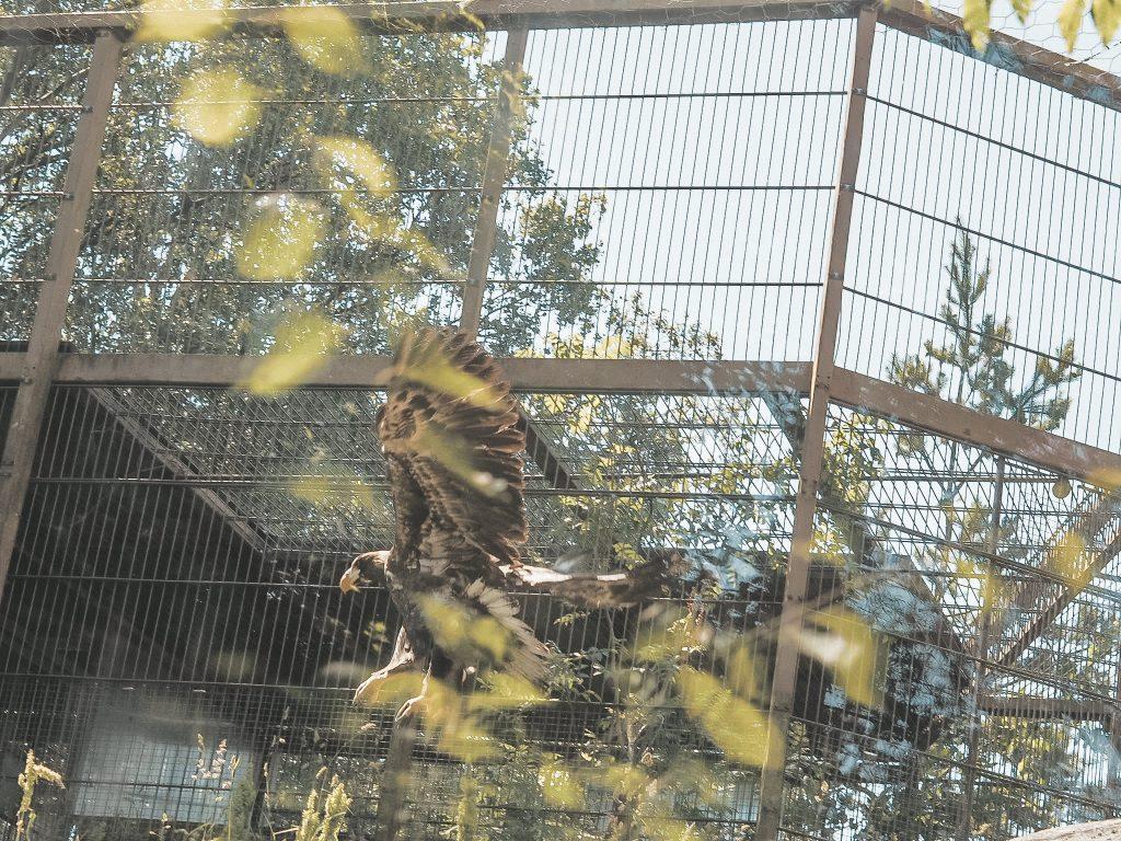 Korkeasaaren eläinpuisto.