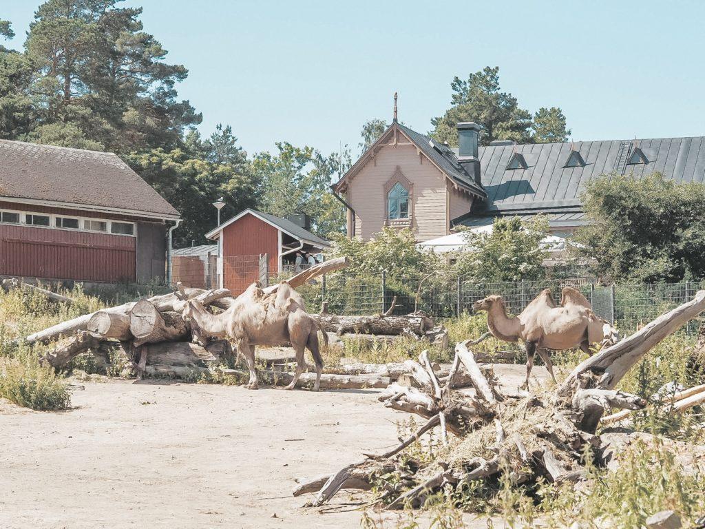 Korkeasaari eläinpuisto.